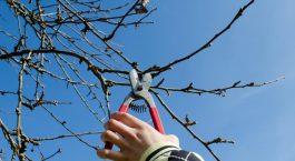 davey tree service marin county