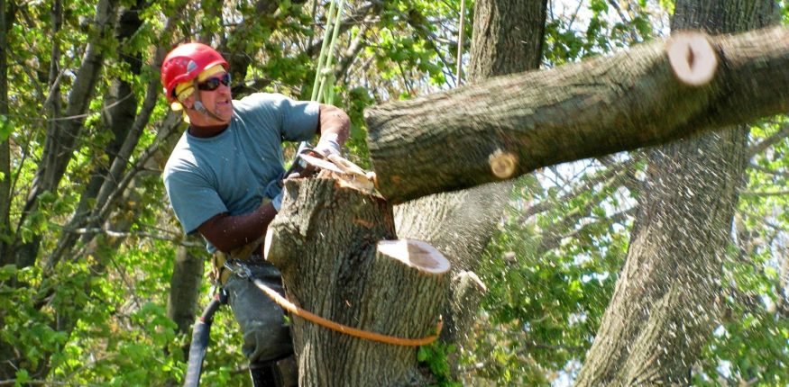 tree-removal-services-in-city