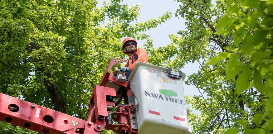 specialist-for-tree-service