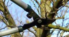 monster tree service reviews