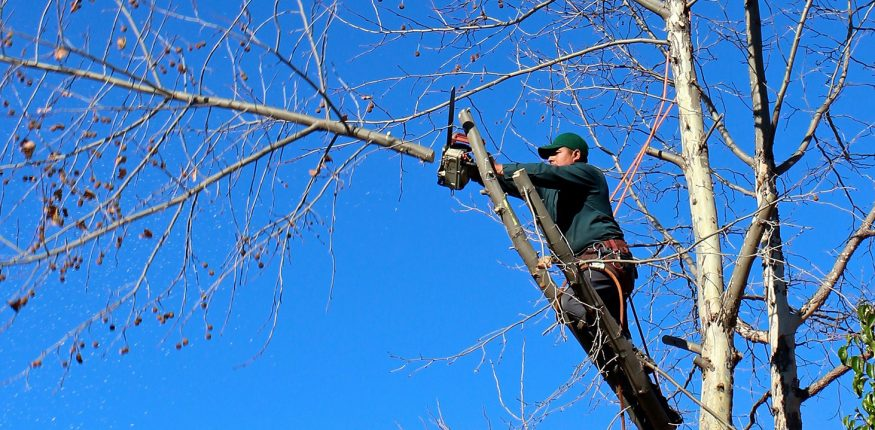 tree cutting services cost